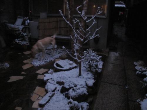 初雪_b0173241_216380.jpg