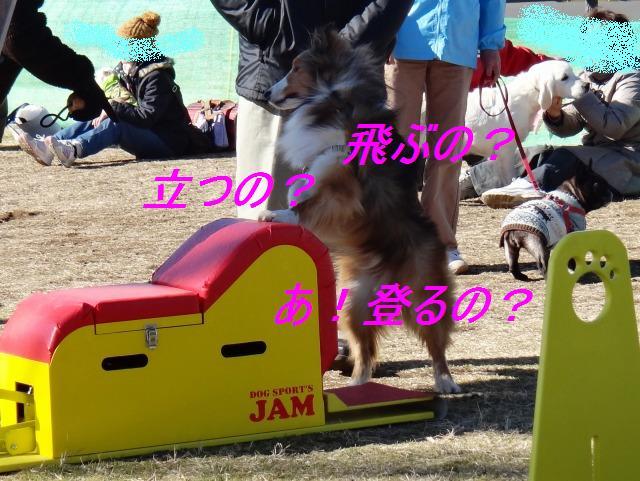 e0195743_1952165.jpg