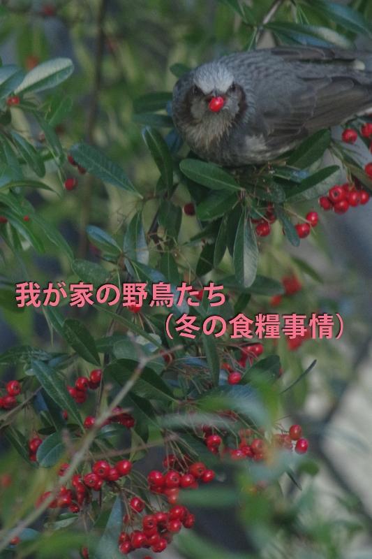 b0144049_1412180.jpg