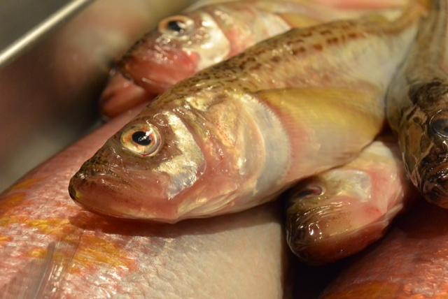 魚の顔に注目。いい顔してる奴はうまいって本当か?&1月20日(月)のランチメニュー_d0243849_0151455.jpg