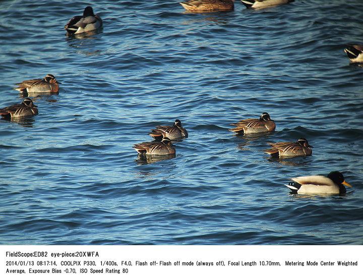2014.1.13 狭山湖_c0062451_14353362.jpg