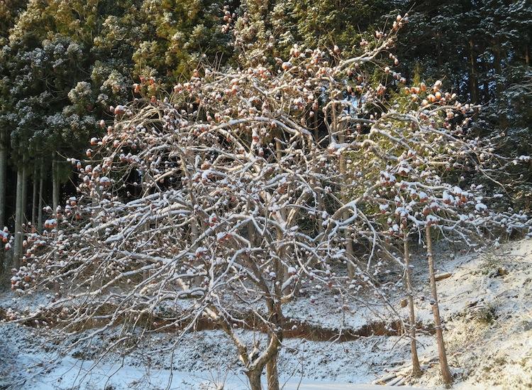 雪の朝_d0231263_21173861.jpg