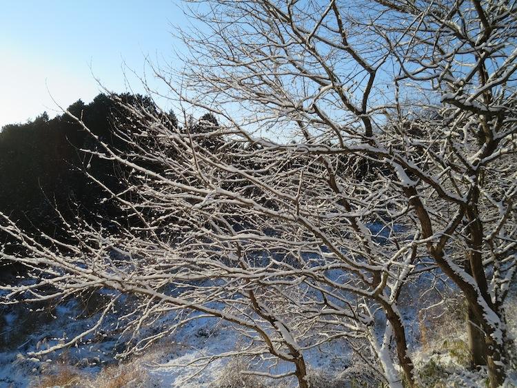 雪の朝_d0231263_21193355.jpg