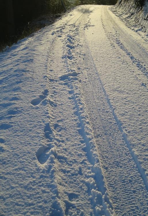 雪の朝_d0231263_21202830.jpg