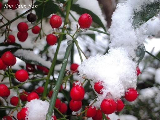 今朝、京都は雪景色 2014年1月19日_a0164068_17161793.jpg