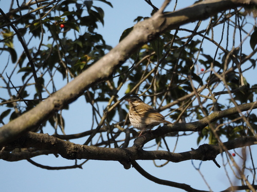 冬の鳥撮り_e0305074_22313397.jpg