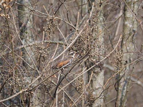 冬の鳥撮り_e0305074_22314957.jpg