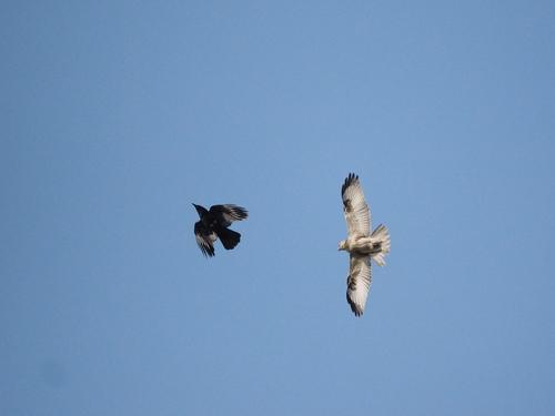 冬の鳥撮り_e0305074_2232391.jpg