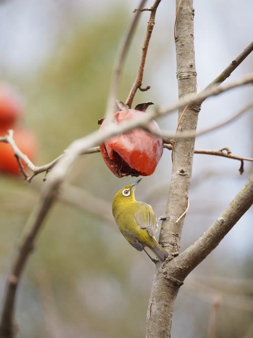 冬の鳥撮り_e0305074_22335486.jpg