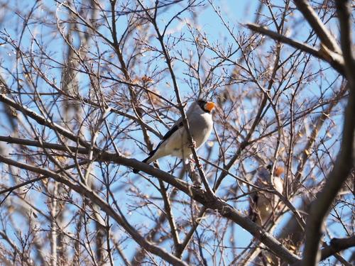 冬の鳥撮り_e0305074_22342523.jpg