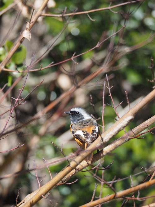 冬の鳥撮り_e0305074_22345885.jpg