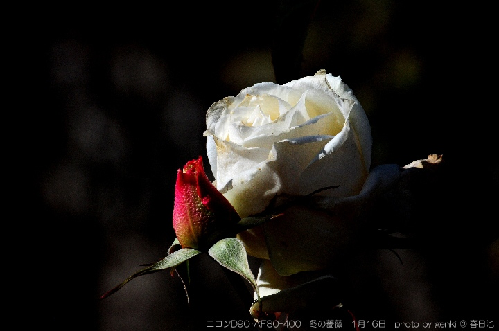 c0066578_168151.jpg