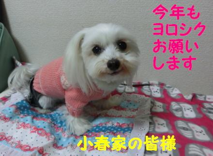 b0193480_1028396.jpg