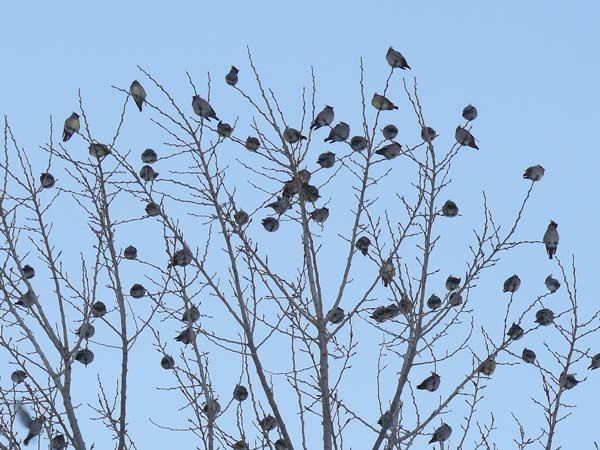野鳥・3_d0162994_95464.jpg