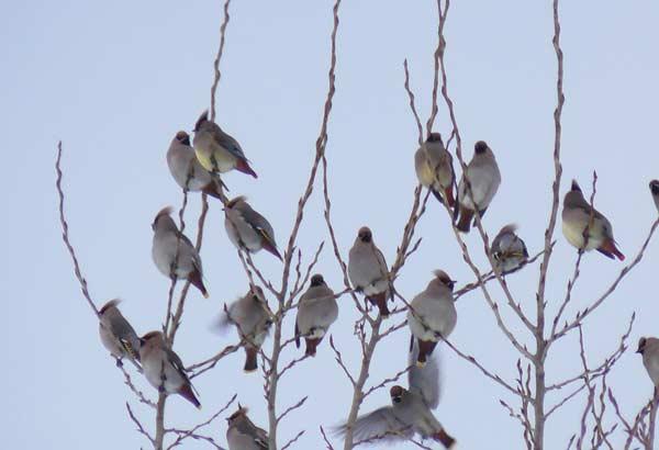 野鳥・3_d0162994_955247.jpg