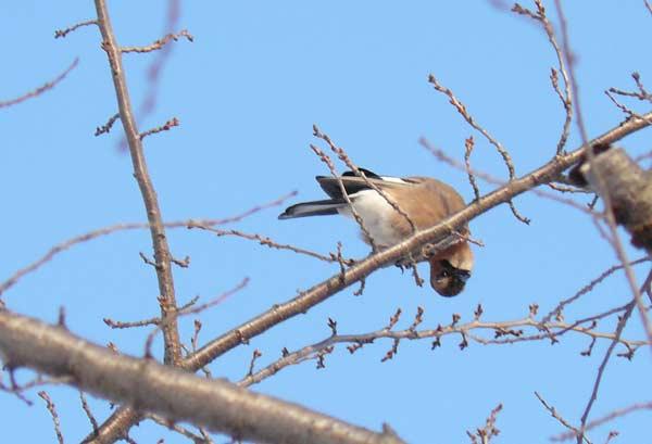 野鳥・3_d0162994_992620.jpg