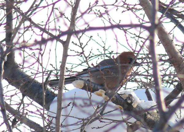 野鳥・3_d0162994_99423.jpg
