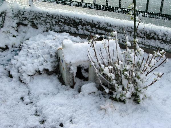 初雪_f0129726_2211067.jpg
