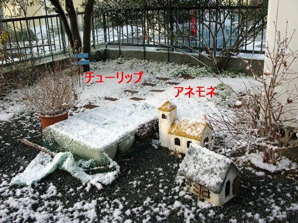 初雪_f0129726_22221020.jpg