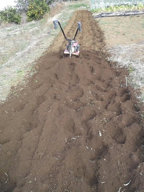 大寒ですが、畑を耕しました。_b0137932_21261651.jpg