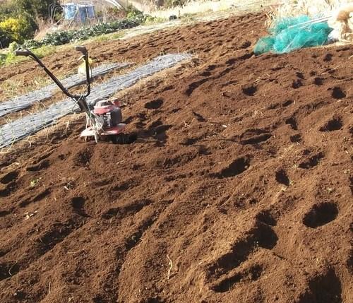 大寒ですが、畑を耕しました。_b0137932_21263669.jpg