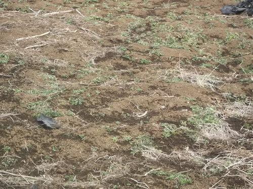 大寒ですが、畑を耕しました。_b0137932_21565386.jpg