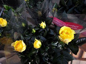 バラ咲きジュリアンが「かわいい!」_c0141652_18302993.jpg