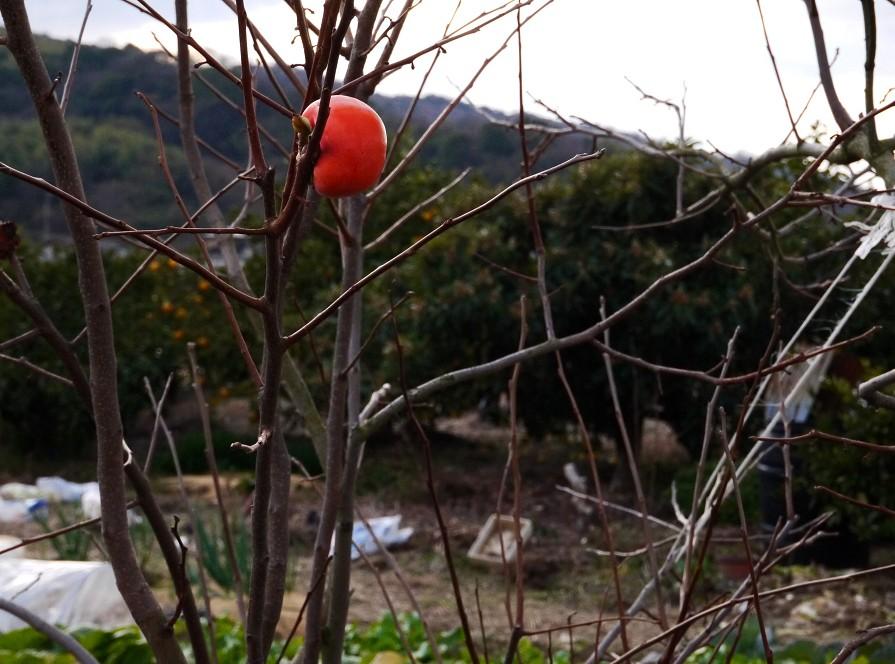 里山の風景_b0093754_22341564.jpg