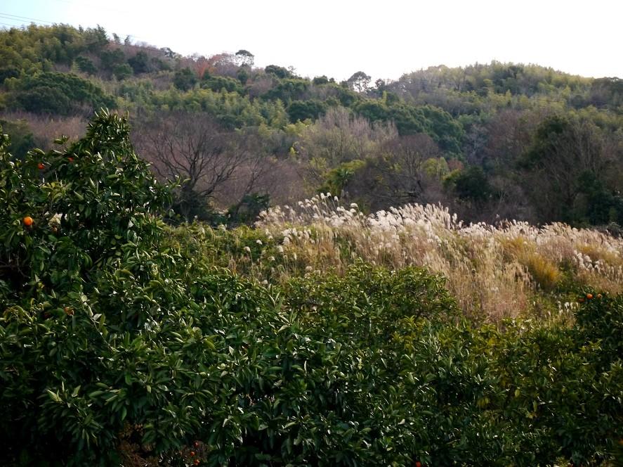 里山の風景_b0093754_22361244.jpg