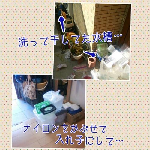 b0003855_1754508.jpg