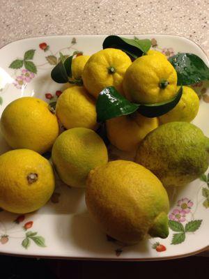 柑橘3兄弟_f0134268_15181939.jpg