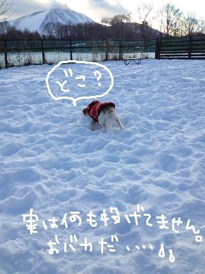 b0092580_1394985.jpg