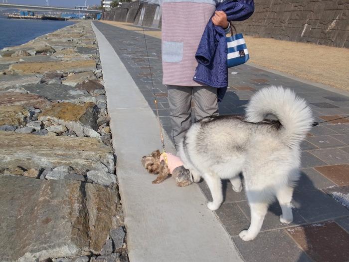 南国の冬のお散歩_c0049299_20223534.jpg