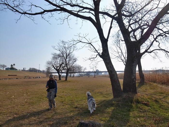 南国の冬のお散歩_c0049299_20292451.jpg