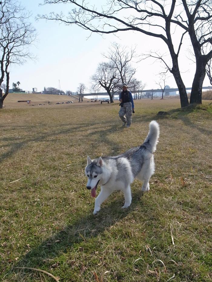 南国の冬のお散歩_c0049299_20321841.jpg
