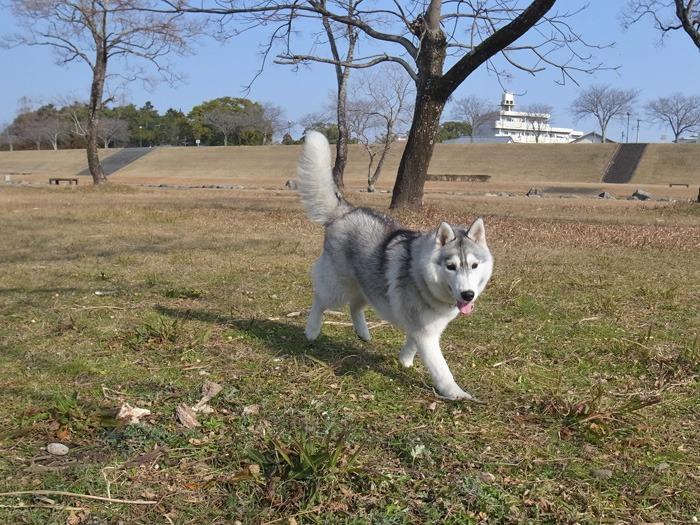 南国の冬のお散歩_c0049299_20344241.jpg