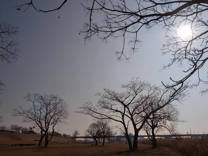 南国の冬のお散歩_c0049299_2036166.jpg