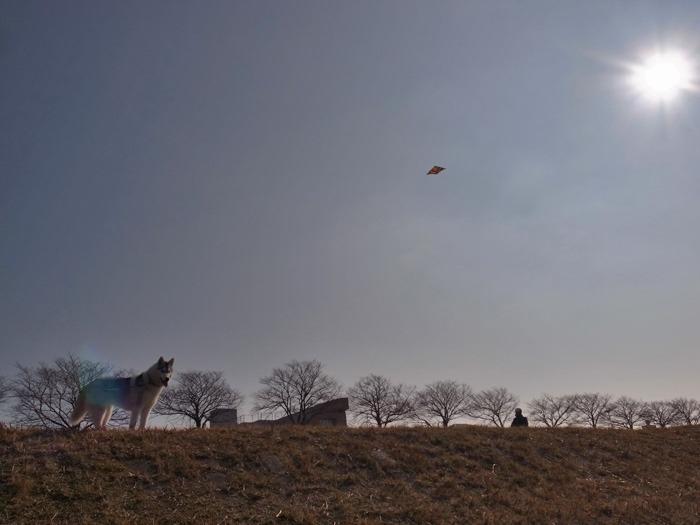 南国の冬のお散歩_c0049299_203841100.jpg