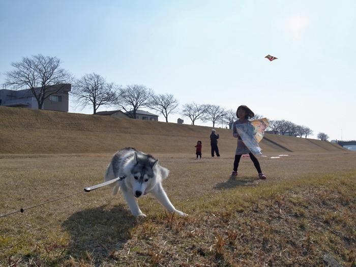 南国の冬のお散歩_c0049299_2038998.jpg
