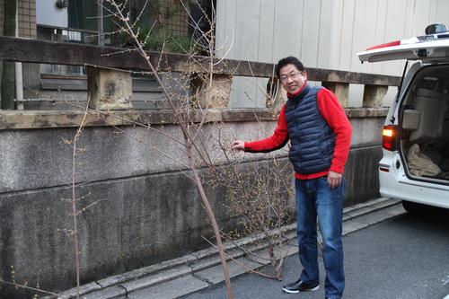 京都要庵歳時記 『早春の香り 蝋梅』 2_d0033734_22451465.jpg
