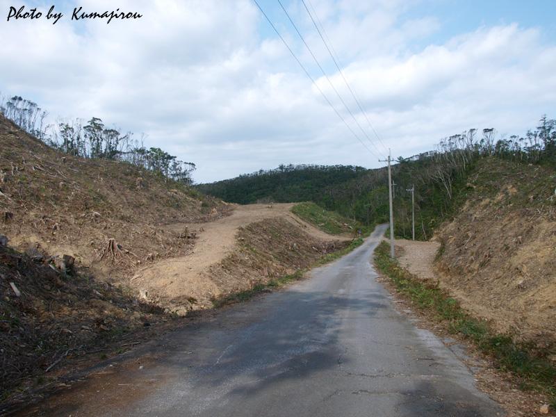 新たなる伐採地_b0192746_20360267.jpg