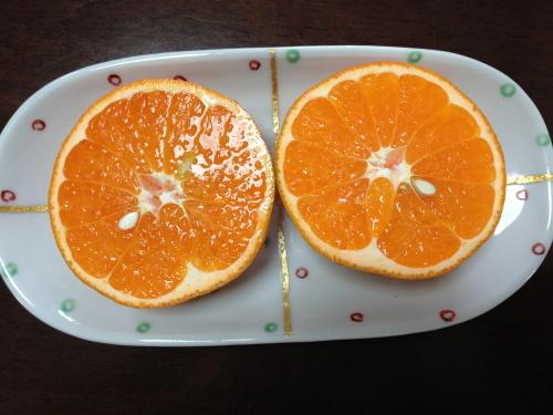 清峰オレンジを食べながら_c0185356_14125080.jpg