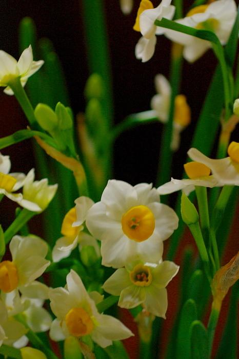 春の香が届けられ_e0292469_15584661.jpg