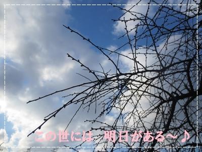 b0167519_23173910.jpg