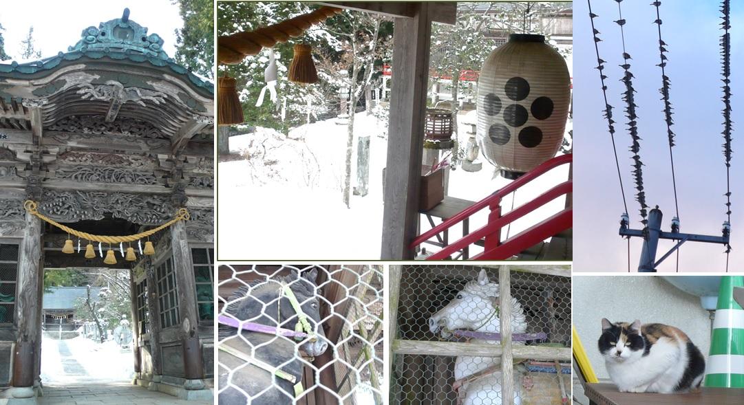有明神社と生き物観察_a0212730_21423573.jpg