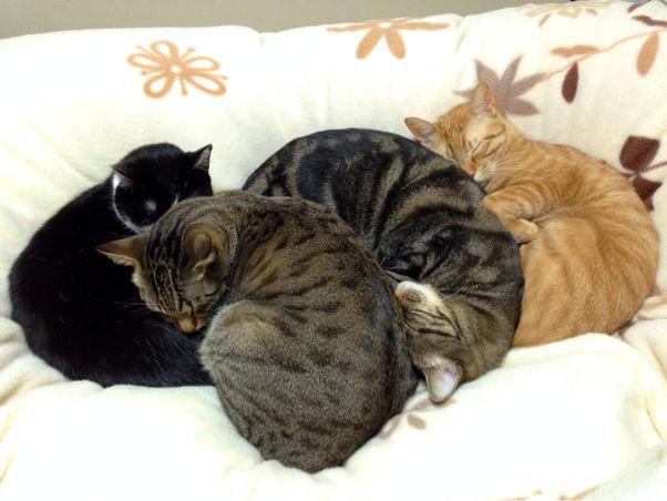 『猫だんご』は秋から春にかけて見られる現象!?