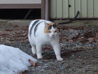 冬の猫 2:new face_a0180681_20112348.jpg
