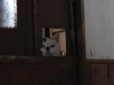 冬の猫 2:new face_a0180681_20401061.jpg