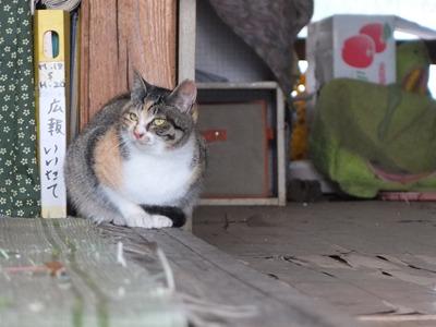 冬の猫 2:new face_a0180681_204497.jpg