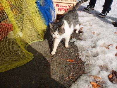 冬の猫 3:保護猫_a0180681_21183013.jpg